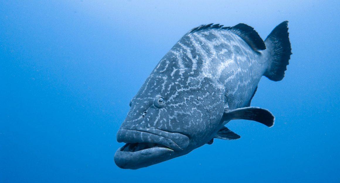 El turismo de pesca debe covertirse en una parte integral del turismo de la estrategia europea