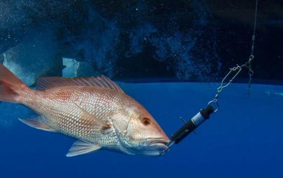 Una victoria bipartidista para la conservación de los peces de arrecife del Golfo