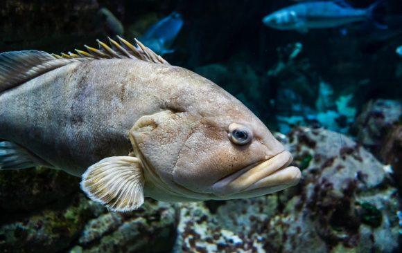 Cambio climático: los peces marinos son cada vez más pequeños